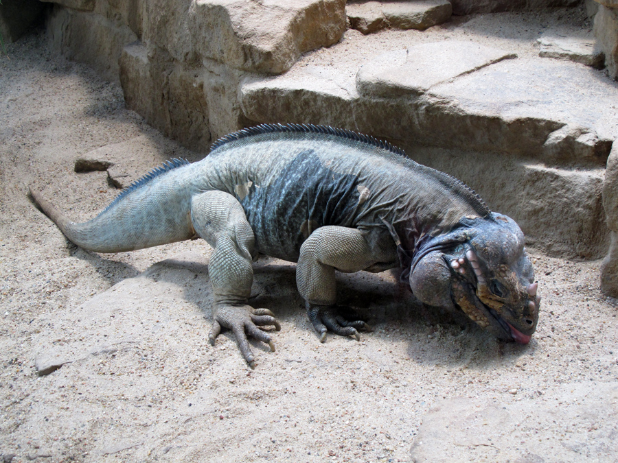 Аквариум в Берлинском зоопарке
