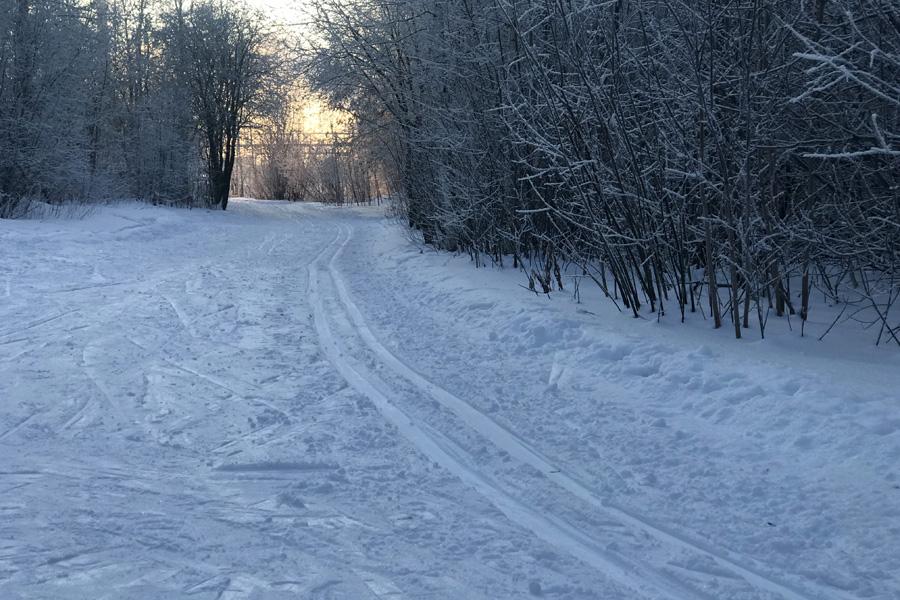 Польза беговых лыж для здоровья