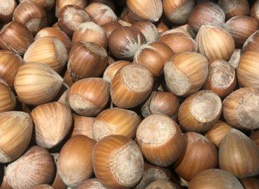 Фундук: маленький орех, большая польза