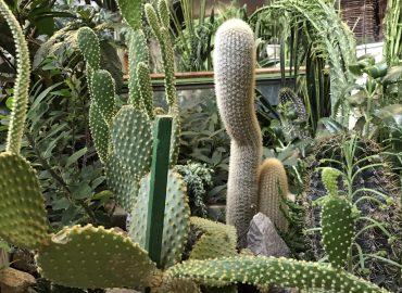 Комнатные растения в спальне: для здорового сна