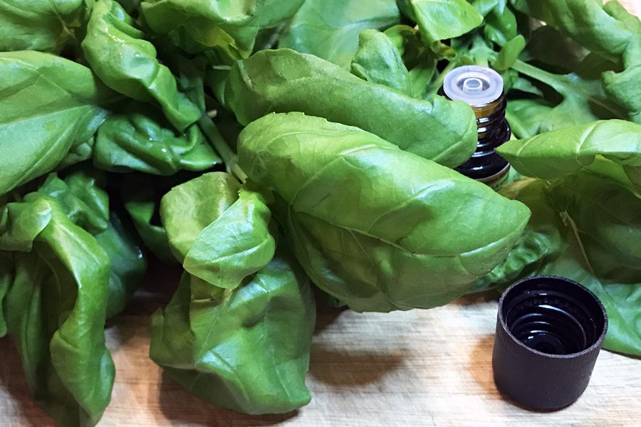 Эфирное масло базилика: лечебные свойства и применение