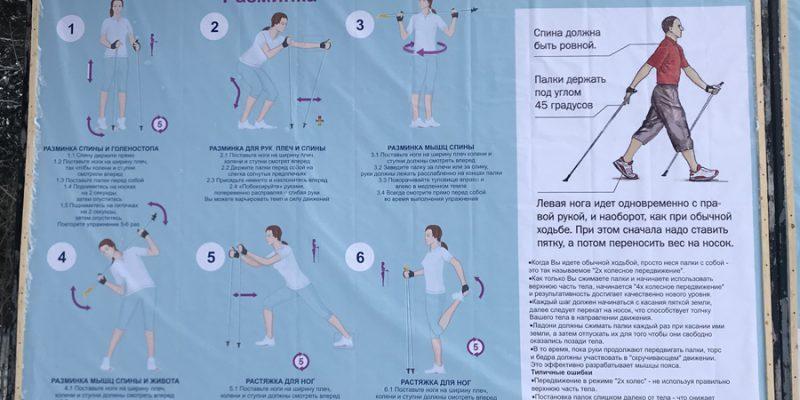 Скандинавская ходьба: польза, техника, снаряжение