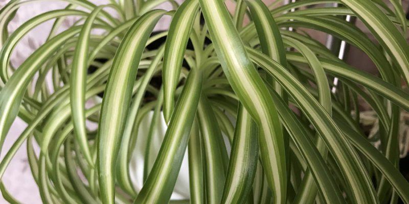 Комнатные растения, очищающие и увлажняющие воздух