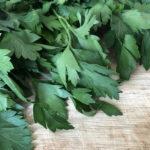 Петрушка: полезные свойства лекарственной травы