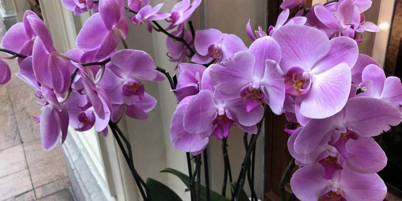 Комнатные растения для начинающего цветовода