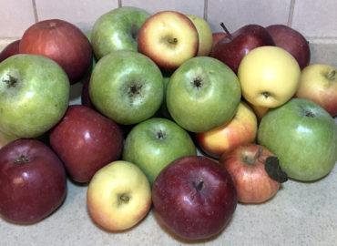 Яблоки: состав и польза для организма