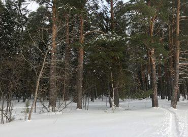 Пути выхода из зимней депрессии